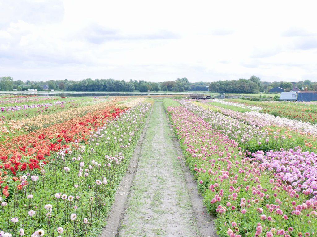 Fam Flower Farm